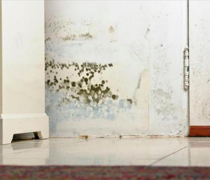 Mold Remediation Southern McHenry County Residents:  Follow These Mold Safety Tips If You Suspect Mold