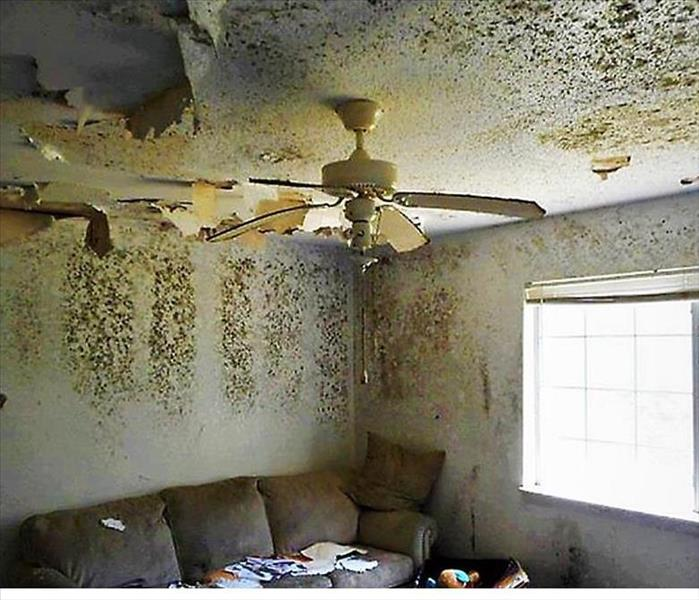 Mold Remediation Mold Coverage and Your Insurance Claims due to Water Loss Event